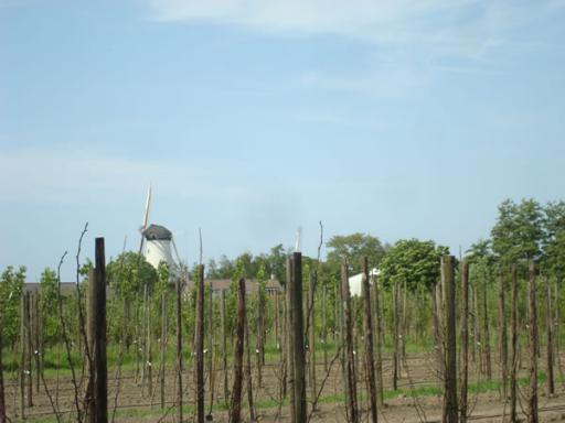 Zicht op boomgaard en molen