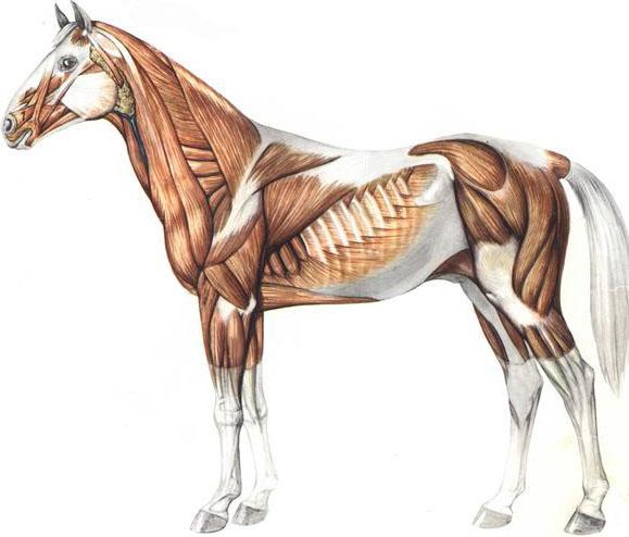 Workshop Massage voor Paarden (deel 3)