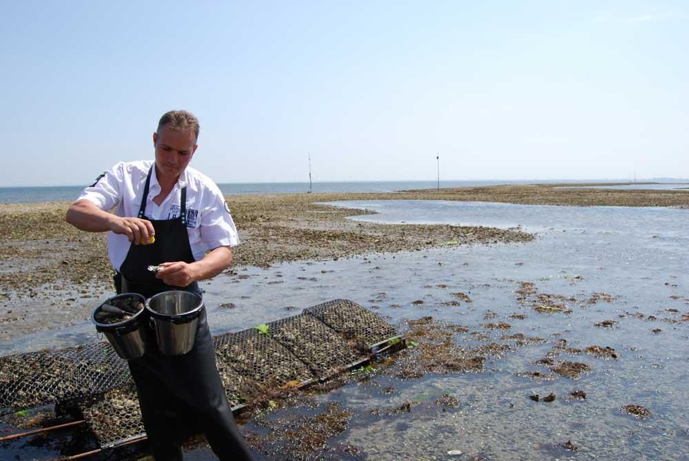 Zaterdag rondvaart met bezichtiging oestercultuur