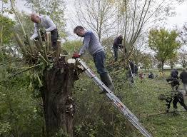 Wilgenknotten of/en diverse natuuronderhoudswerkzaamheden NL-Doet Goese Sas