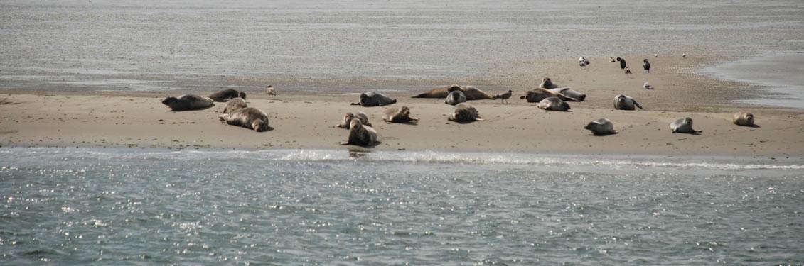ieder woensdag Zeehondensafari, luxe korte vaartocht ( 2uur ) naar de zeehonden